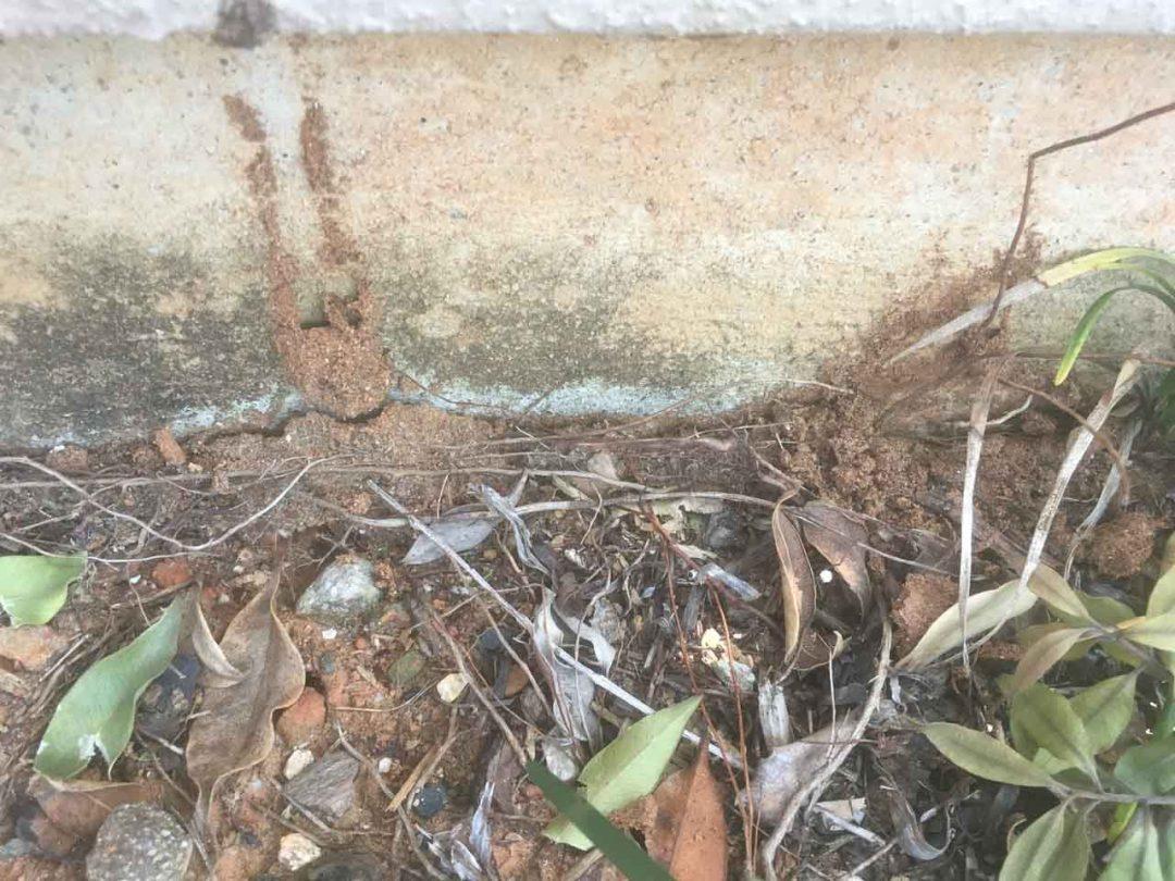 Ant Mudding (not Termite)