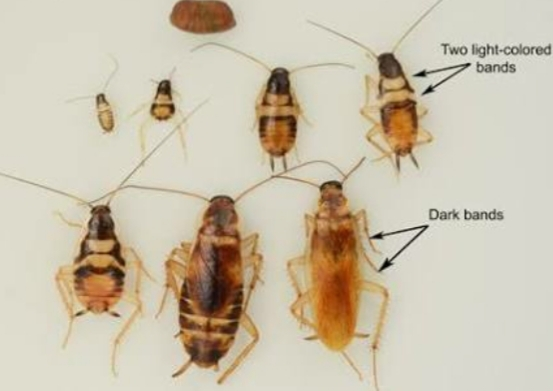 cockroaches with annotation