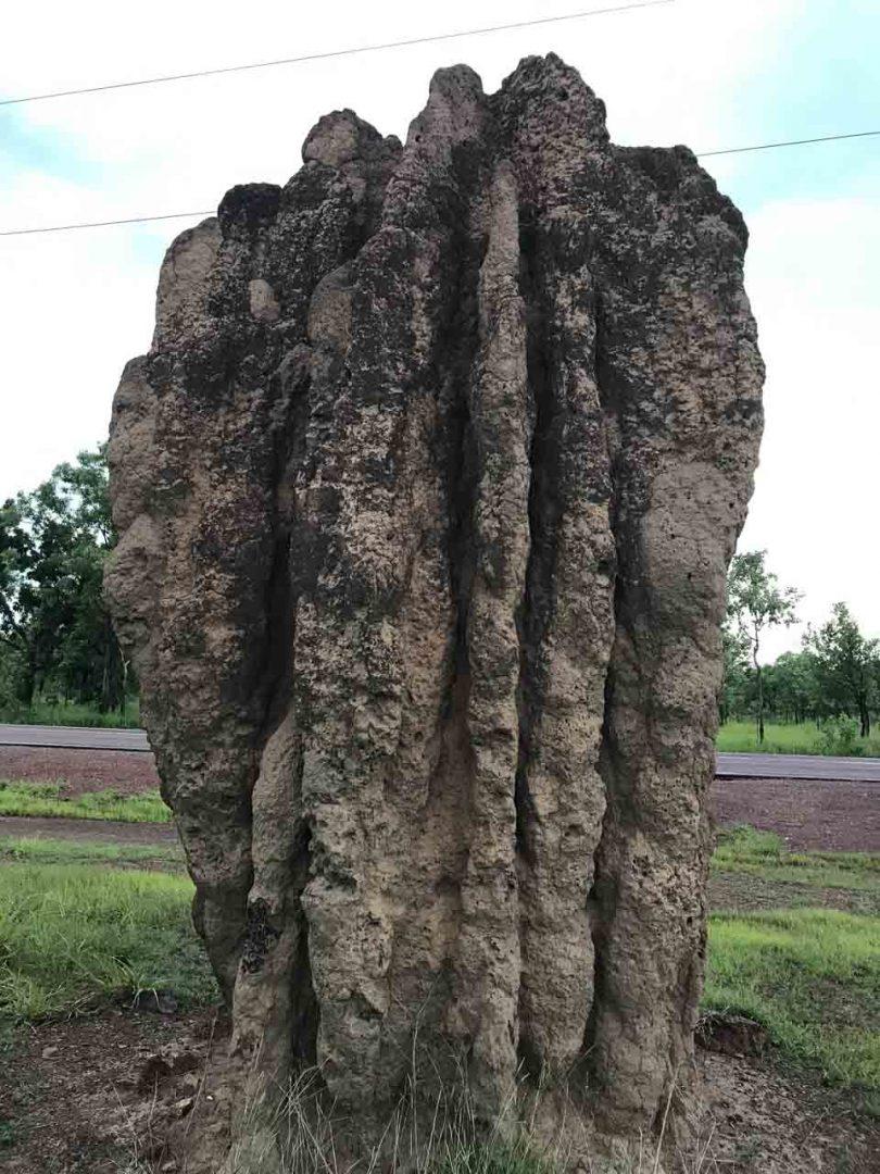 Impressive Termite Nest