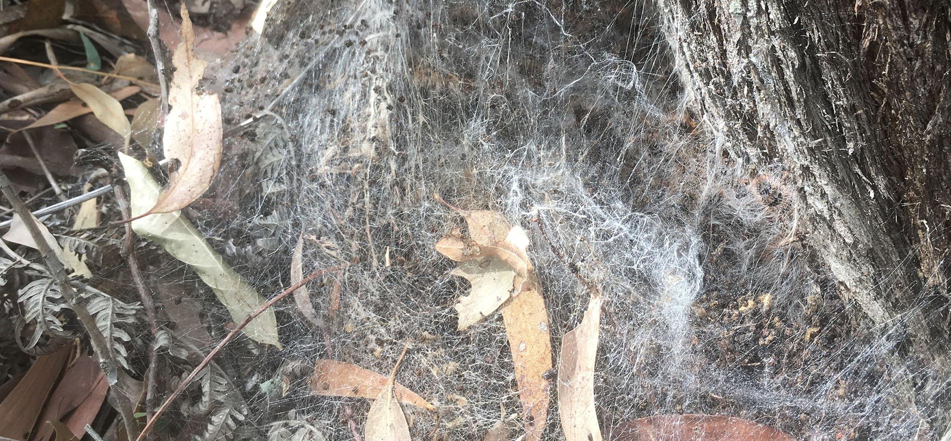 Pest Rodent Spider Bird Managment Training