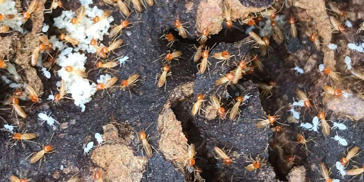 Termite & timber pest control training Australia