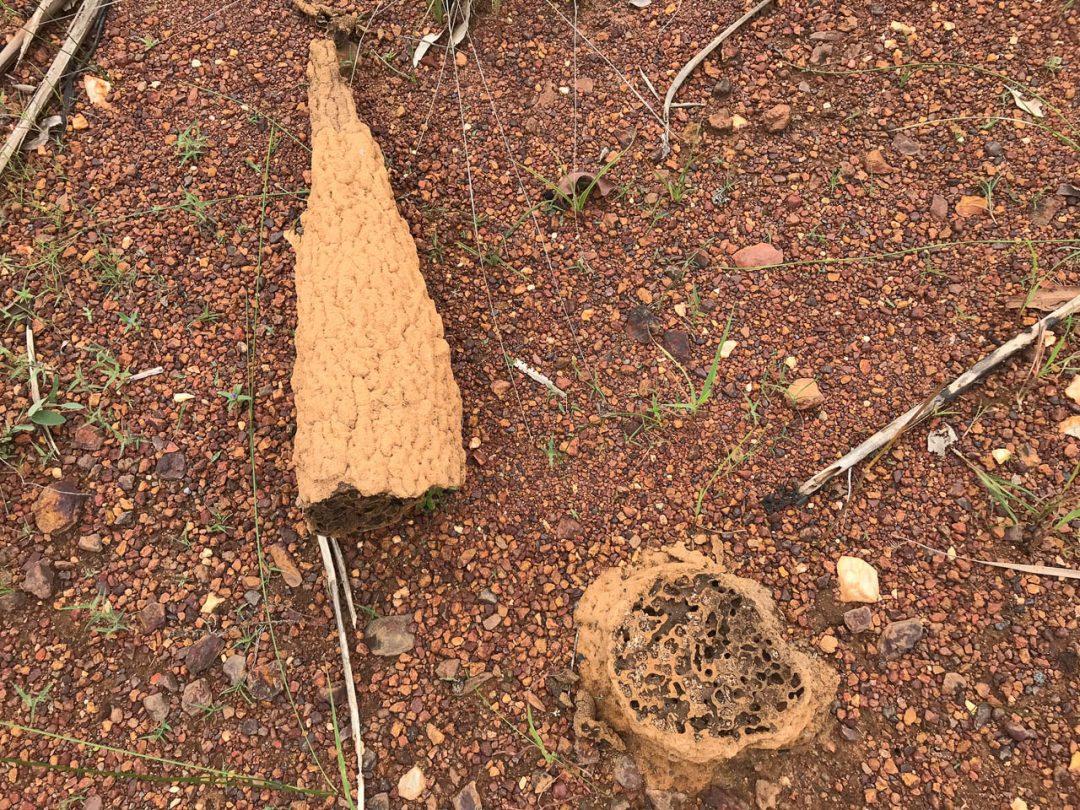 Termite cone