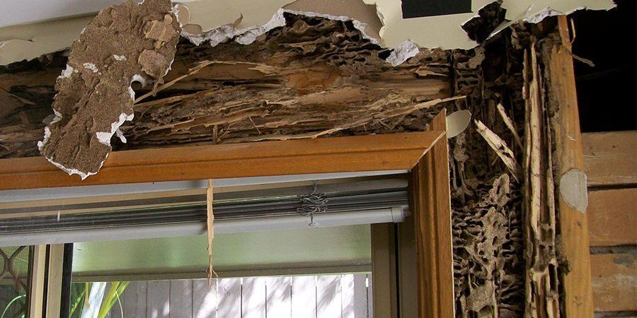 Termite control correspondence course Australia